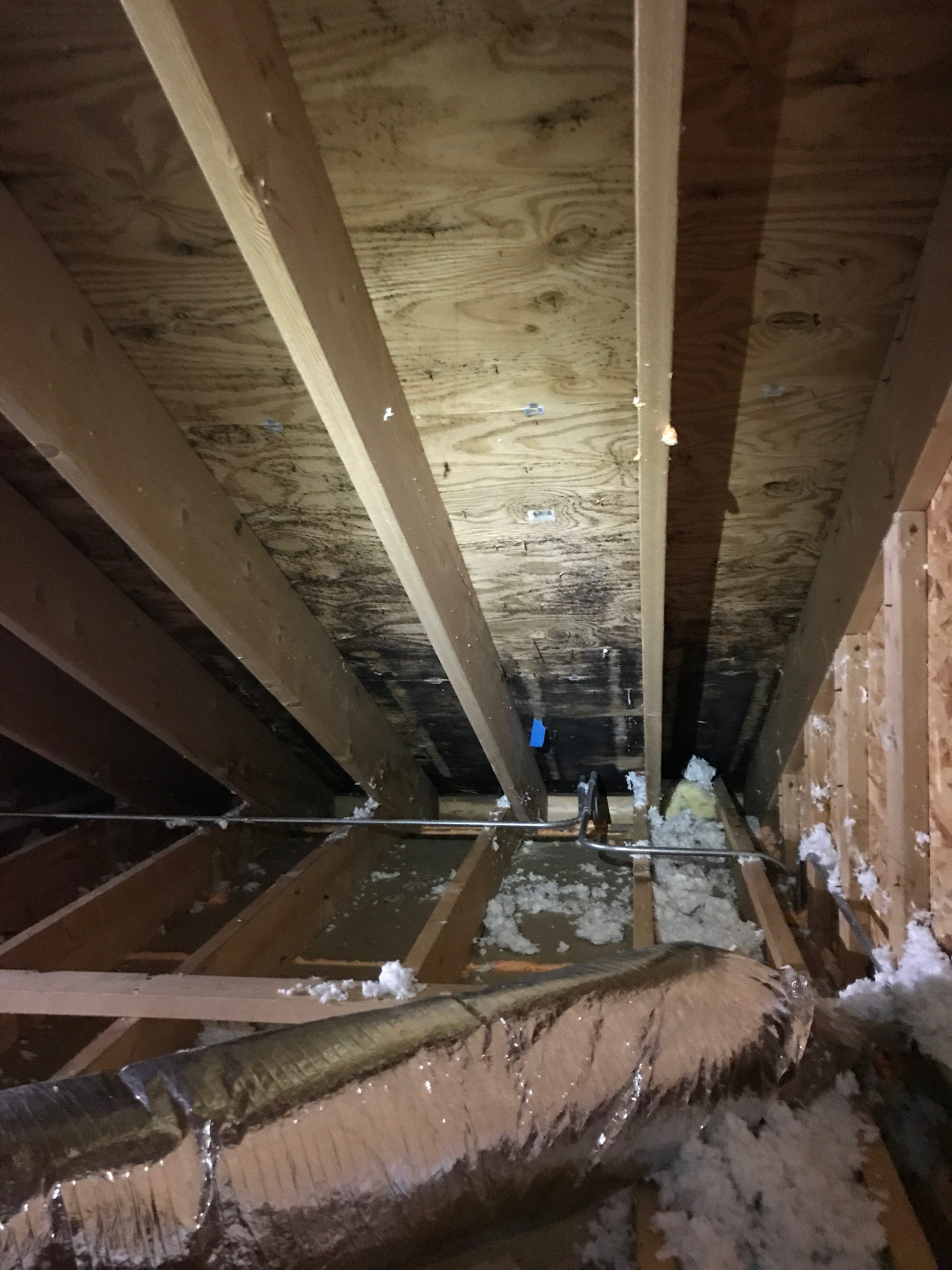 Attic Mold Removal Contractor